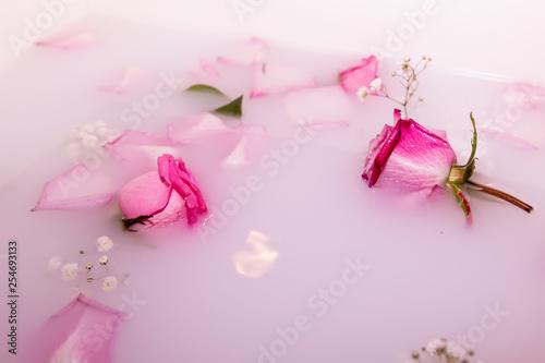 Photo  Fleur dans l'eau