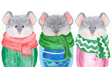 Fototapeta Fototapety na ścianę do pokoju dziecięcego - Watercolor collection of Mice in sweater. 2020 Chinese New Year of the Rat. Christmas greeting card