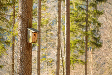 Wooden Booth For Birds On The Tree.