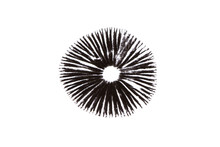 A Mushroom Leaves A Black Spore Print On A White Background.
