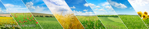 Obraz Panoramic view of green field and blue sky . Collage.Wide photo. - fototapety do salonu