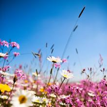 Fleures De Printemps Sur Fond ...
