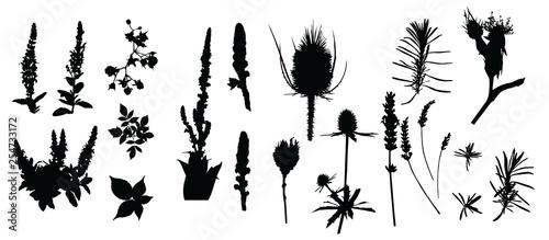 Zioła, dziewanna, szczeć, oset, malina, jerzyna, szałwia, lawenda, dzika róża,