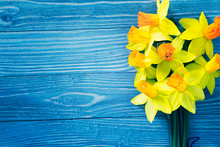 Daffodil Flowers On Blue Woode...