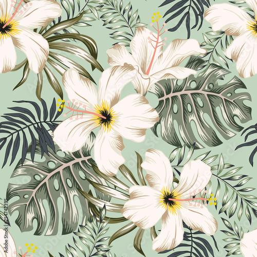 jasne-egoztyczne-biale-kwiaty-mietowe