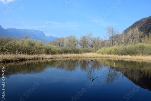 Fotografie, Obraz  Biotop - Teich am Kalterer See in Südtirol