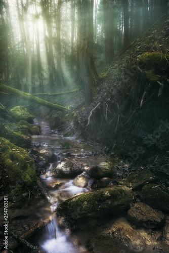 strumyk-gorski-w-lesie-o-poranku