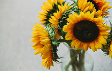 High Angle View Of Sunflowers In Vase On Table