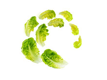Spiral Flying Heap Of Green Baby Cos Lettuce Salad Leaves