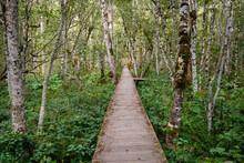Montenegro, Kolasin Province, Biogradsko Jezero National Park, Boardwalk Through Primeval Forest