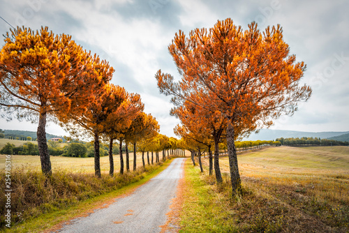 Val D'Orcia countryside in Tuscany, Italy with rolling hills and dirt gravel road in farm landscape idyllic picturesque autumn orange vibrant red foliage cypress trees