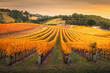 canvas print picture - Autumn Vineyard