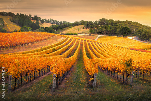 La pose en embrasure Vignoble Autumn Vineyard