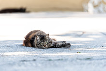 Stray Tabby Long Hair Fur Cat With Green Eyes Staring Looking Lying Down On Sidewalk Street Pavement In Sarasota, Florida Resting Relaxing