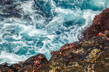 Crabs On Stones Against Of Spl...