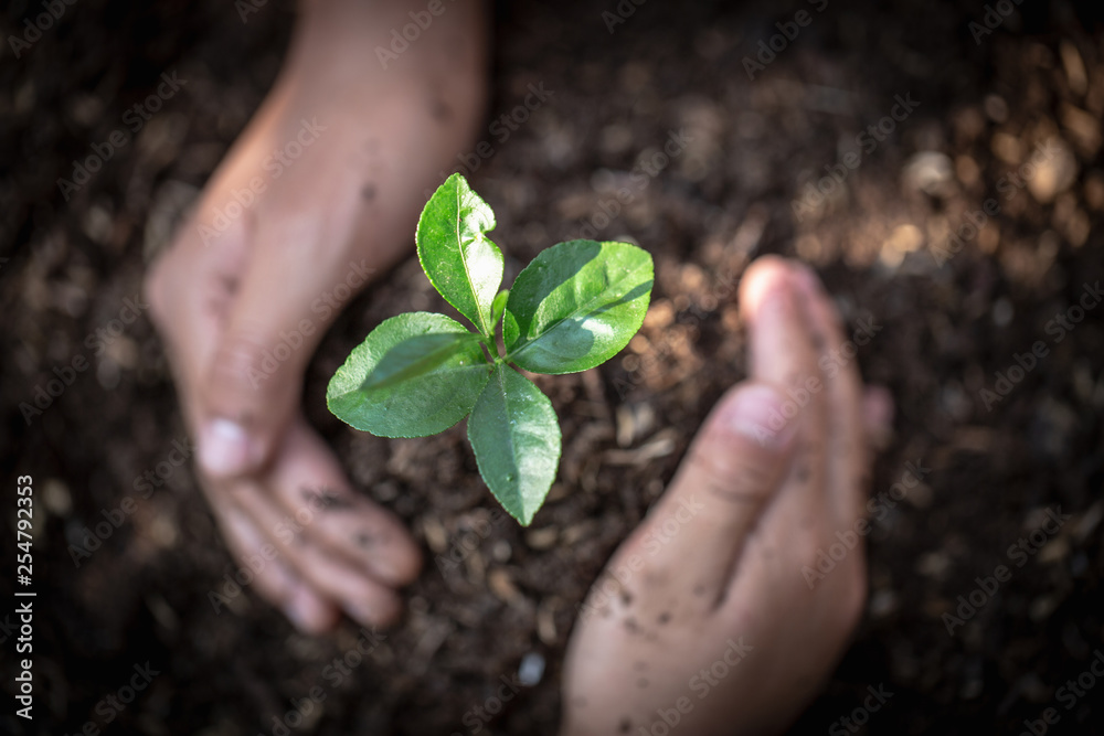 Fototapeta Hand protects seedlings that are growing, Environment Earth Day In the hands of trees growing seedlings, reduce global warming, concept of love the world.