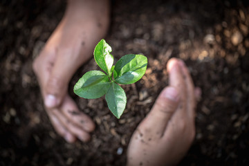 Hand protects seedlings that are growing, Environment Earth Day In the hands of trees growing seedlings, reduce global warming, concept of love the world.