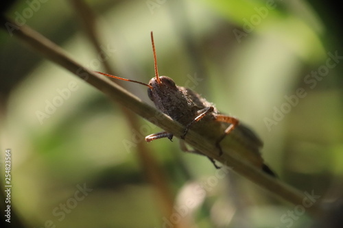 Fototapeten Natur Small insects in the grass photo Czech Republic, Europe