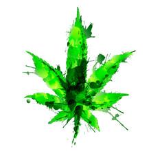 Grunge Cannabis Or Hemp Leaf Made Colrful Bright Splashes. Vector Illustration