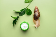 Giant Achatina Snail And Cosmetics On Color Background