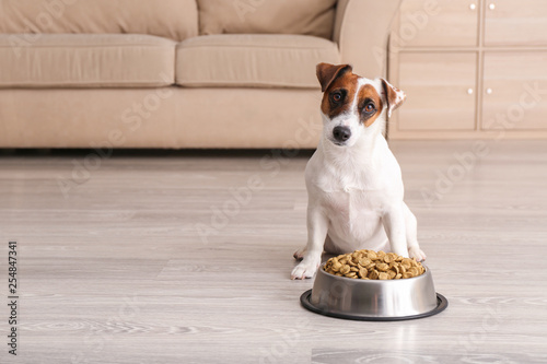 Obraz Cute funny dog near bowl with dry food at home - fototapety do salonu