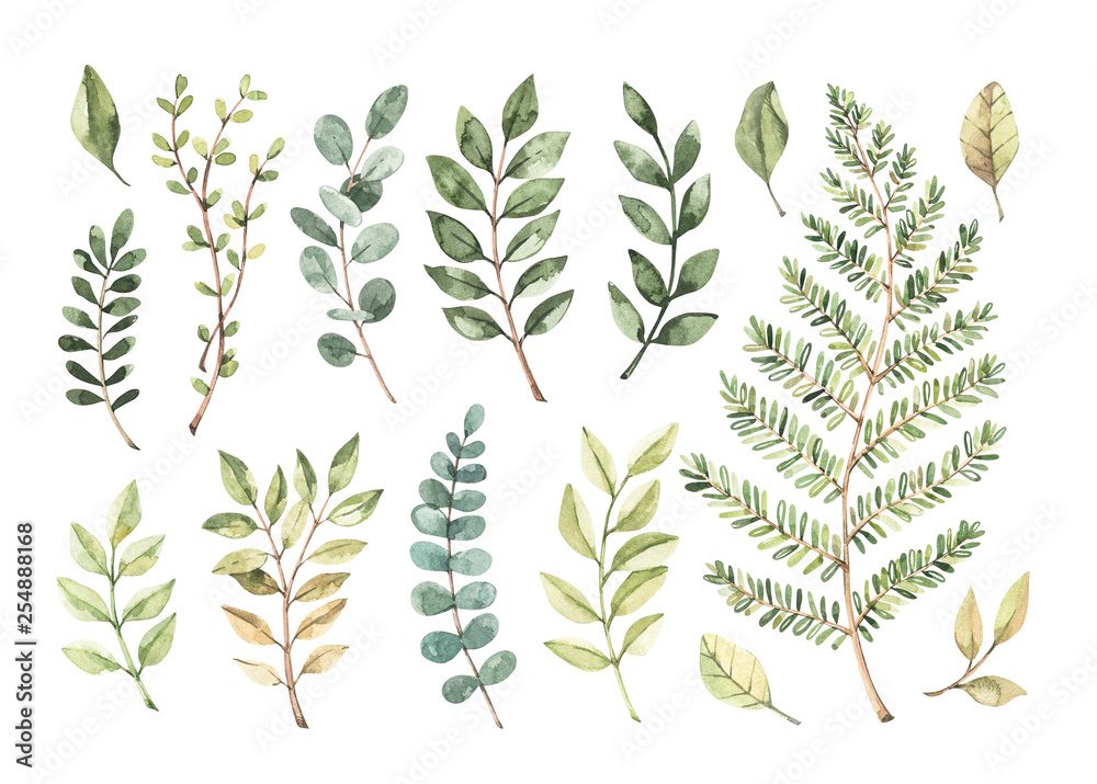 Fototapety, obrazy: Vector watercolor illustrations. Botanical clipart. Set of Green leaves, herbs and branches. Floral Design elements. Perfect for wedding invitations, greeting cards, blogs, posters and more