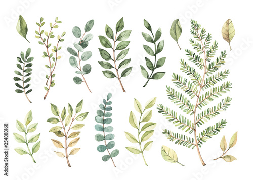Plakaty botaniczne   plakat-na-wymiar-vector-watercolor-illustrations-botanical-clipart-set-of-green-leaves
