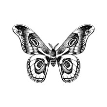 Hand Drawn Black And White Butterfly