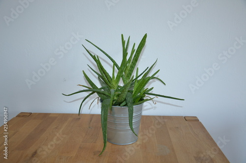 Recess Fitting Chameleon Blume Pflanze Natur