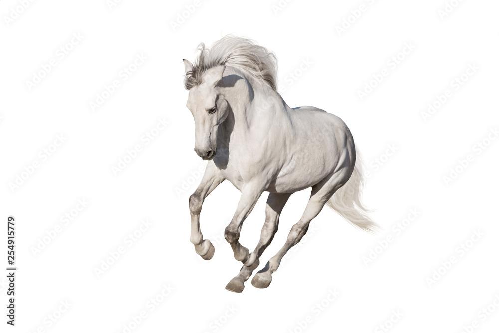 Fototapety, obrazy: White horse isolated on white background