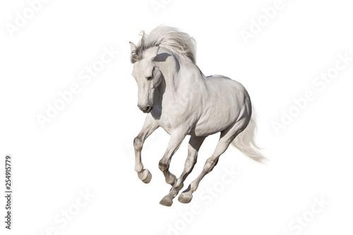 White horse isolated on white background Canvas-taulu