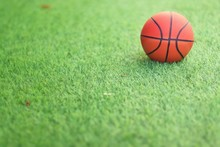 Basketball On The Green Grass In The Garden