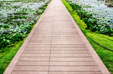 Wooden Straight Walkway And Green Grass In The Outdoor Botanical Garden