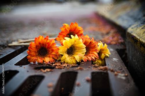 Fotografia, Obraz  Flores en la alcantarilla