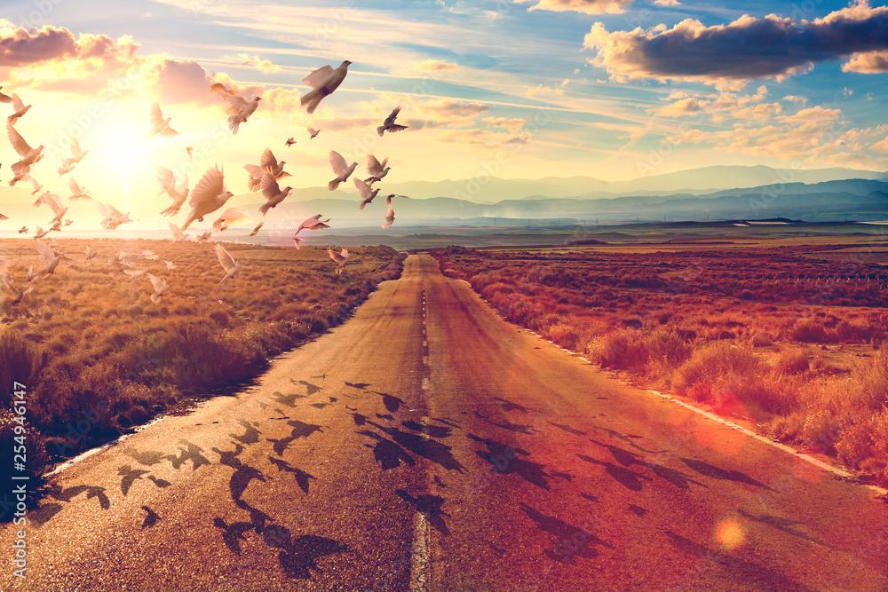 Fototapety, obrazy: Carretera y concepto de viajes y aventuras.Palomas volando y concepto de espiritualidad y encontrar el camino de la fe.