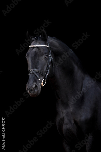 Fototapety, obrazy: Beautiful horse on a black background