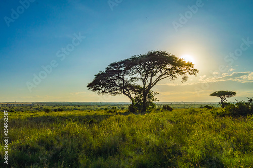 View of the sunset on the savannah of Nairobi