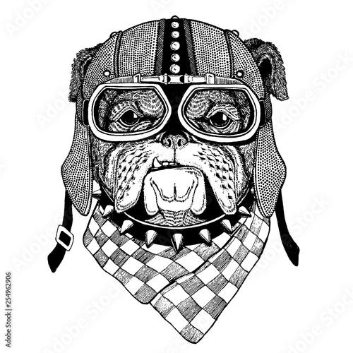 Bulldog, dog wearing motorcycle, aero helmet Canvas Print