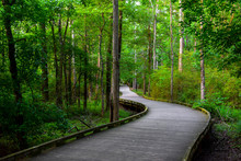 A Wooden Bridge Flowing Around Trees And Onto A Trail