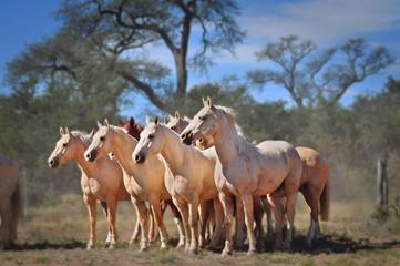 caballos blancos con fondeo de árboles