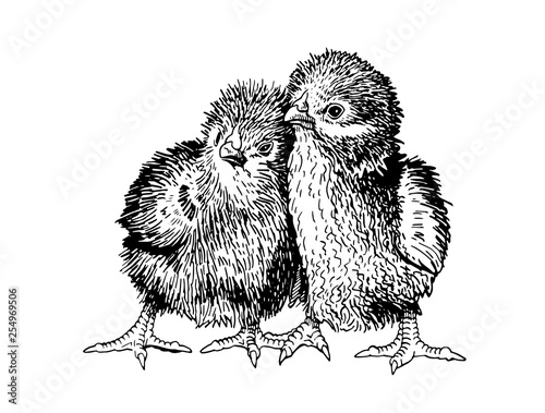 Carta da parati Graphical couple of chicks isolated on white background, vector illustration