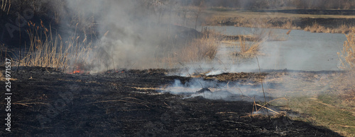Foto Natural disaster, destroyed cane grass and bush at riverbank in marsh after fire