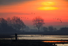 A Sunrise In The Netherlands With A Typical Dutch Landscape And Geese Taking Off. The Sun Behind The Clouds With Lake And A Windmill.