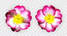 Colorful Naturalistic Pink Whi...