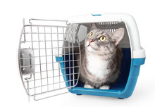 Cute Lost Grey Cat Sits In A Plastic Cage Pet Carrier Isolated On White. Travel Transportation, Veterinary Clinic And Pet Care Concept