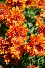 Orange Flowers At The Garden