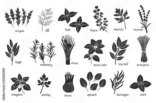 Fototapeta Black herbs spices silhouettes obraz