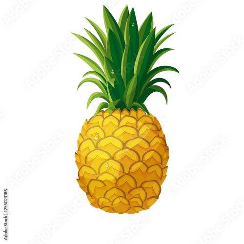 Obraz na plátně pineapple icon