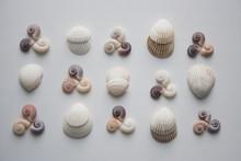 Spiral And Scallop Seashells P...