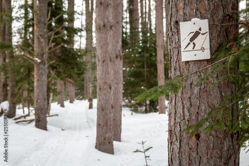 Fotografie, Obraz  A ski trail in Northern Maine.